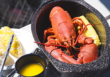 Cooked lobster in pot, Maine, United States