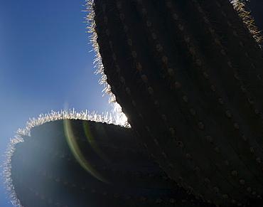 Sun shining behind cactus, Arizona, United States