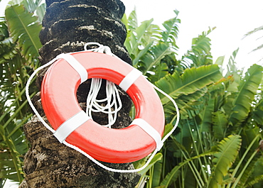Life preserver hanging on palm tree