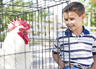 USA, New York, Flanders, Boy (8-9) standing in front of cage with rooster