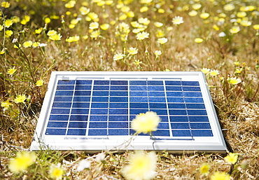 Solar panel lying on meadow with flowers