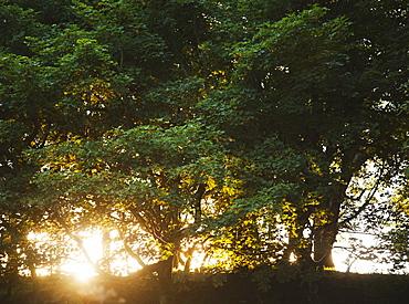 Ireland, County Westmeath, Sunset behind trees