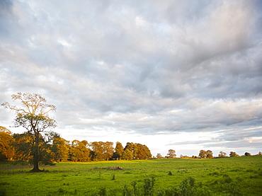 Ireland, County Westmeath, landscape