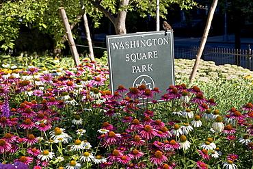 Flowers in Washington Square Park