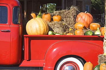 USA, New York, Peconic, pickup truck loaded with pumpkins