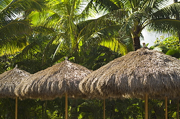 Palm frond umbrellas in front of palm trees