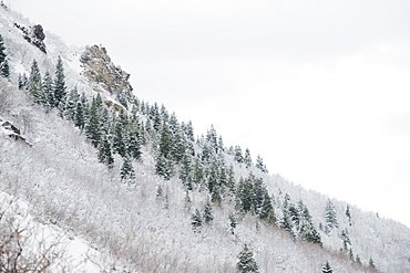 Snow covered trees on mountain side