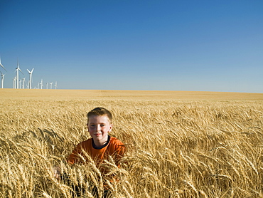 Boy sitting in tall wheat field on wind farm
