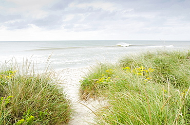 Sandy beach overgrown with marram grass, Nantucket, Massachusetts, USA