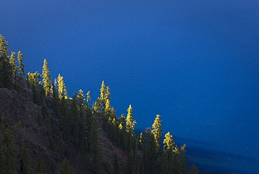 Trees growing on hillside, Crater Lake National Park
