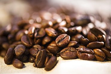 Studio Shot of roasted coffee beans