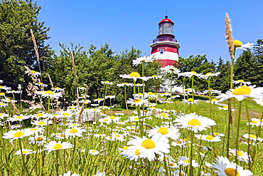 View of meadow with flowers and lighthouse in background, Nova Scotia, Canada