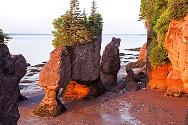 Hopewell Rocks with trees on top at sunrise, New Brunswick, Canada