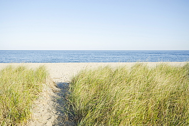 Path leading to beach, Siasconset, Nantucket, Massachusetts, USA