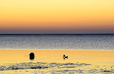 Buoy and anchor silhouetted on wet beach, Duxbury Bay, Massachusetts