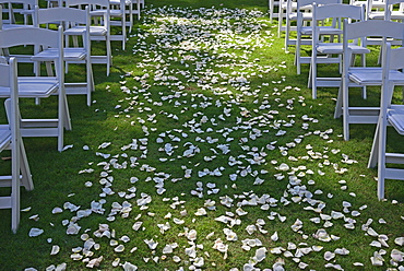 Flower petals on green lawn for wedding ceremony, chairs on sides, symmetrical image