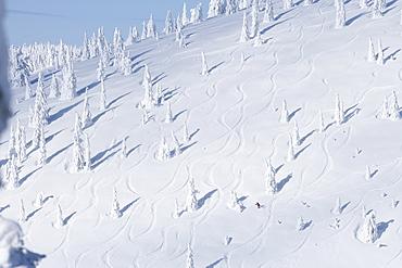 Ski slope with snowy trees, Whitefish, Montana, USA