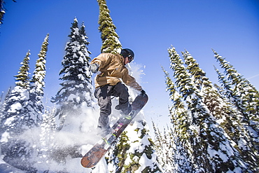 Snowboarder in mid-air against snowy trees, Whitefish, Montana, USA