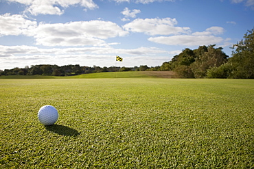 Golf ball on grass in golf course, Massachusetts, USA