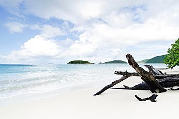 Drift wood on beach, St. John, US Virgin Islands
