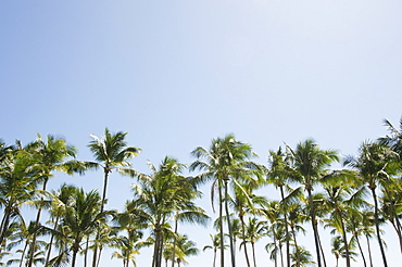 Palm trees against blue sky, Punta Cana, Dominican Republic