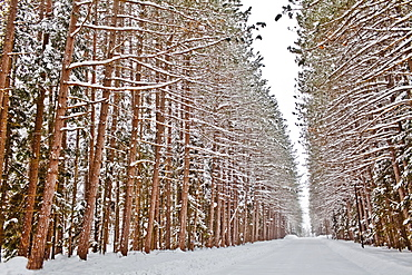 View of road in snowy forest, USA, New York State
