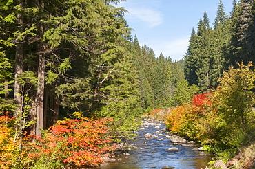 View North Satiam River, USA, Oregon, North Satiam River