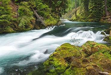 View of McKenzie River, USA, Oregon, McKenzie River