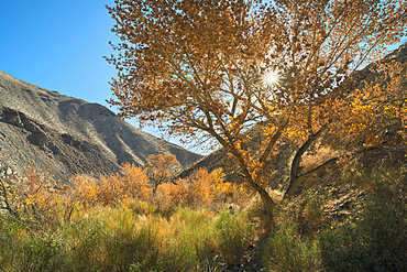 View of Cottonwood Canyon, USA, California, Death Valley National Park, Cottonwood Canyon