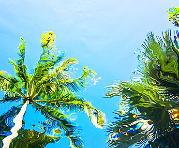 Underwater view of palm trees against clear sky