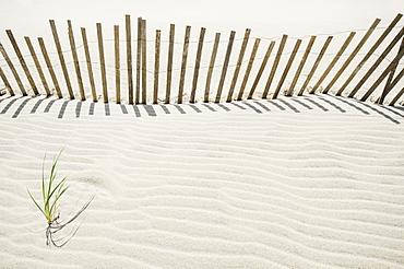 Massachusetts, Nantucket Island, Sand fence on beach