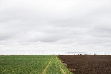 Tire tracks in green field