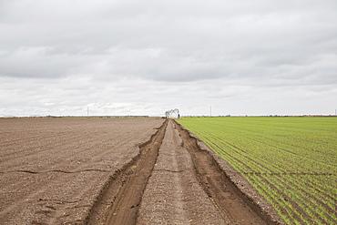 Tire tracks in field
