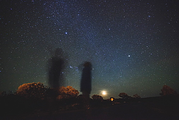Australia, Outback, Northern Territory, Red Centre, West Macdonnel Ranges, Kings Canyon, Trees in plain on starry night