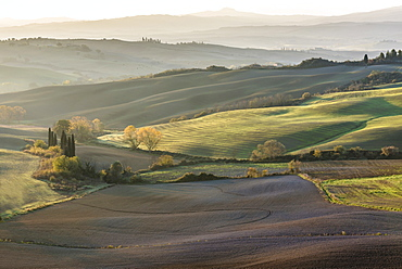 Italy, Tuscany, San Quirico D'orcia, Rolling landscape with autumn trees and plants