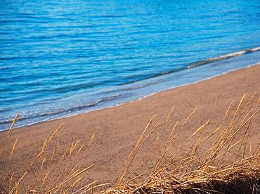 Seed heads by beach in Tromso, Norway