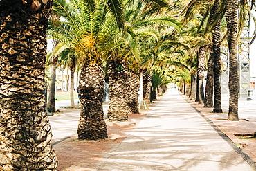 Palm trees on street in Barcelona, Spain