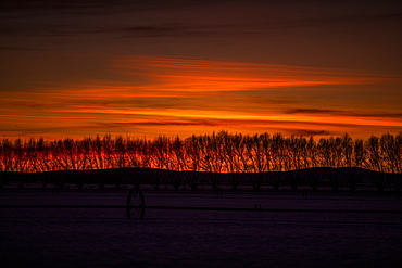 Silhouettes of bare trees at sunset in Bellevue, Idaho, USA