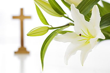 Close up of flowers with cross in background