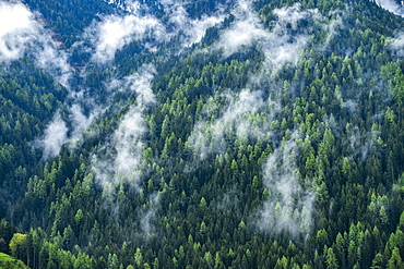 Clouds over hillside pine forest, St. Peter, South Tyrol, Italy