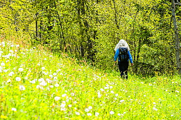 Woman hiking through wildflowers in Dolomites, St. Peter, South Tyrol, Italy