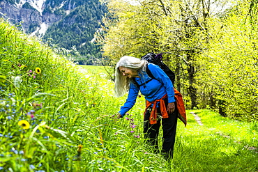 Woman hiking by wildflowers in Dolomites, St. Peter, South Tyrol, Italy
