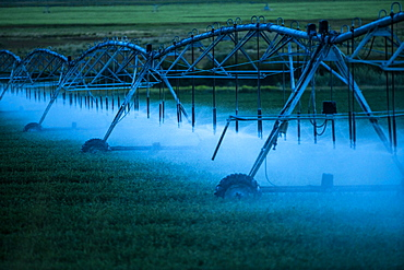 Irrigation system spraying crop field at sunset