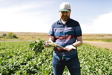 Man examining vegetable crop in field