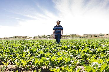 Man walking in crop field