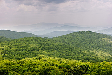 Green forest in Mount Rogers National Recreation Area, USA