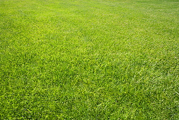 Field of green grass outdoors