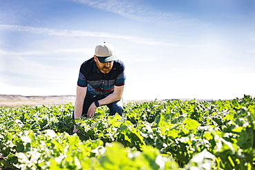 Man crouching in crop field