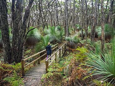 Woman walking on bridge in forest in South Australia, Australia