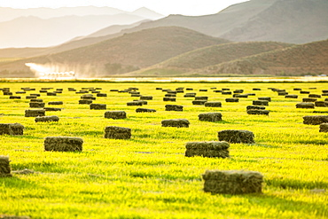 Hay bales in field in Picabo, Idaho, USA